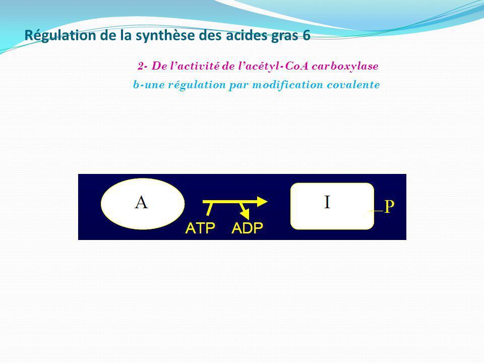 Régulation de la synthèse des acides gras 6 b-une régulation par modification covalente 2- De lactivité de lacétyl-CoA carboxylase