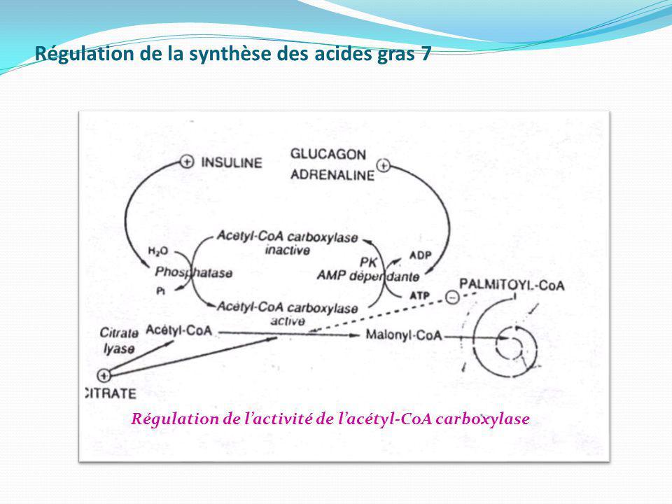 Régulation de la synthèse des acides gras 7 Régulation de lactivité de lacétyl-CoA carboxylase