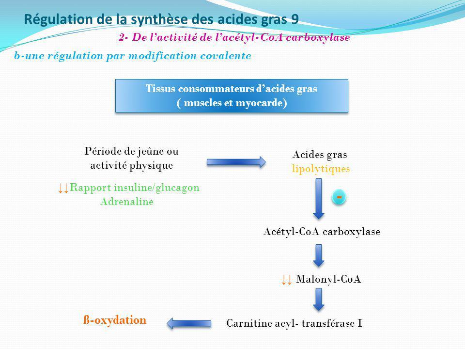 Régulation de la synthèse des acides gras 9 ß-oxydation Tissus consommateurs dacides gras ( muscles et myocarde) Tissus consommateurs dacides gras ( m