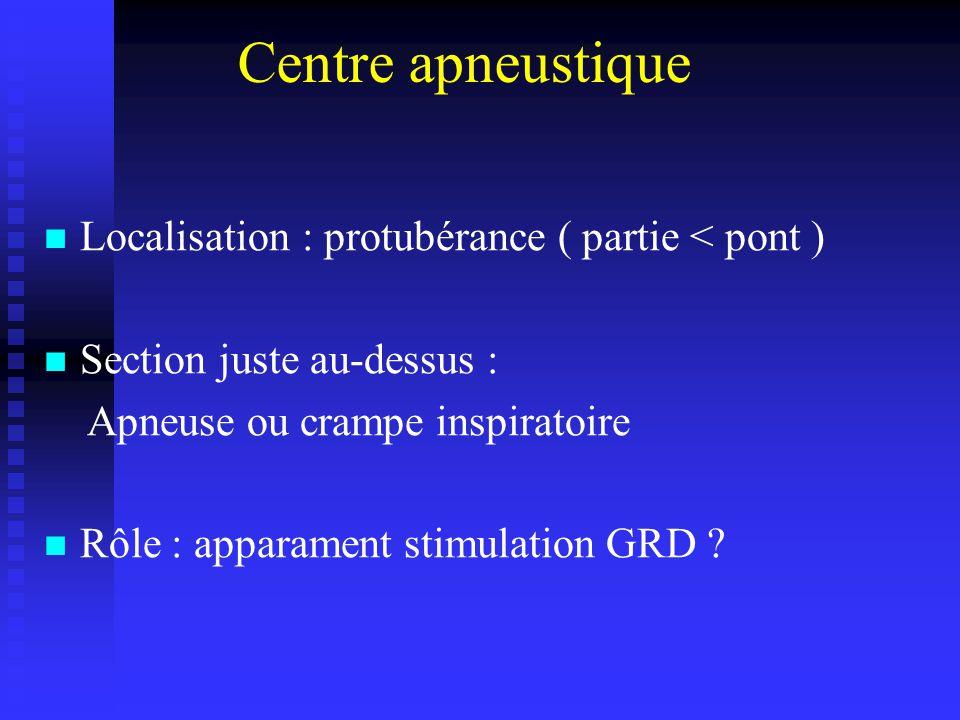 Centre apneustique Localisation : protubérance ( partie < pont ) Section juste au-dessus : Apneuse ou crampe inspiratoire Rôle : apparament stimulation GRD ?