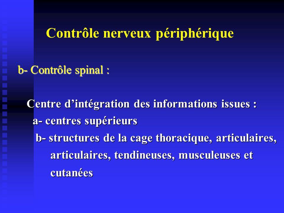 Contrôle nerveux périphérique b- Contrôle spinal : b- Contrôle spinal : Centre dintégration des informations issues : Centre dintégration des informations issues : a- centres supérieurs a- centres supérieurs b- structures de la cage thoracique, articulaires, b- structures de la cage thoracique, articulaires, articulaires, tendineuses, musculeuses et articulaires, tendineuses, musculeuses et cutanées cutanées