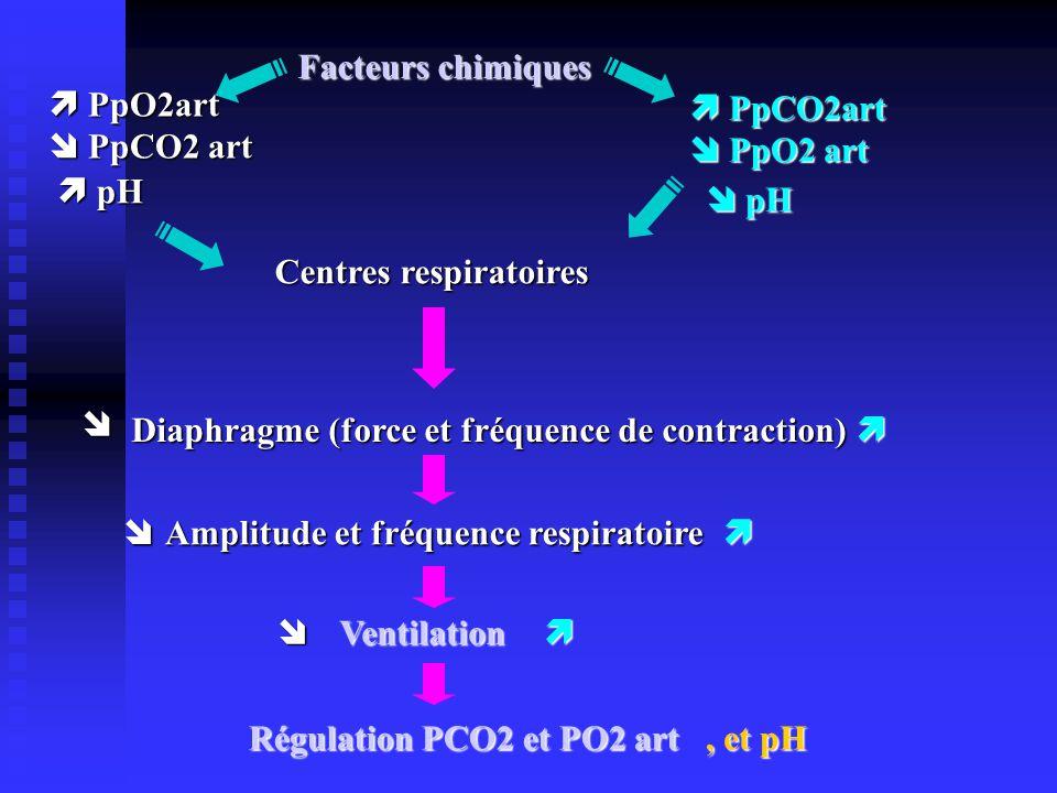PpCO2art PpCO2art PpO2 art PpO2 art PpCO2 art PpCO2 art Facteurs chimiques Centres respiratoires Diaphragme (force et fréquence de contraction) Amplitude et fréquence respiratoire Ventilation pH pH Régulation PCO2 et PO2 art Régulation PCO2 et PO2 art, et pH