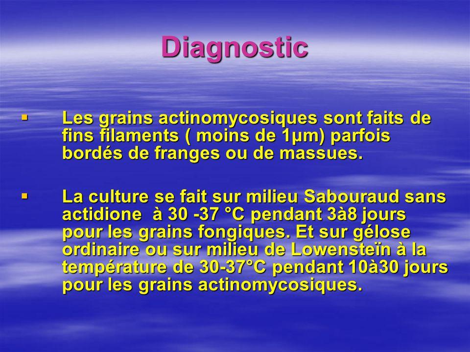 Diagnostic Les grains actinomycosiques sont faits de fins filaments ( moins de 1μm) parfois bordés de franges ou de massues.