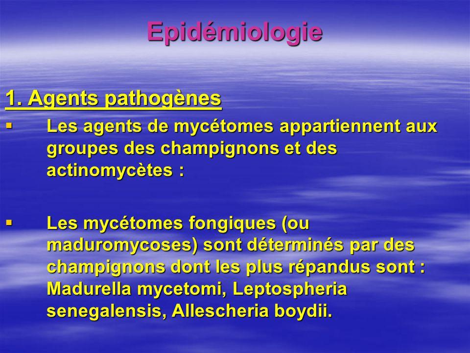 Epidémiologie 1. Agents pathogènes Les agents de mycétomes appartiennent aux groupes des champignons et des actinomycètes : Les agents de mycétomes ap