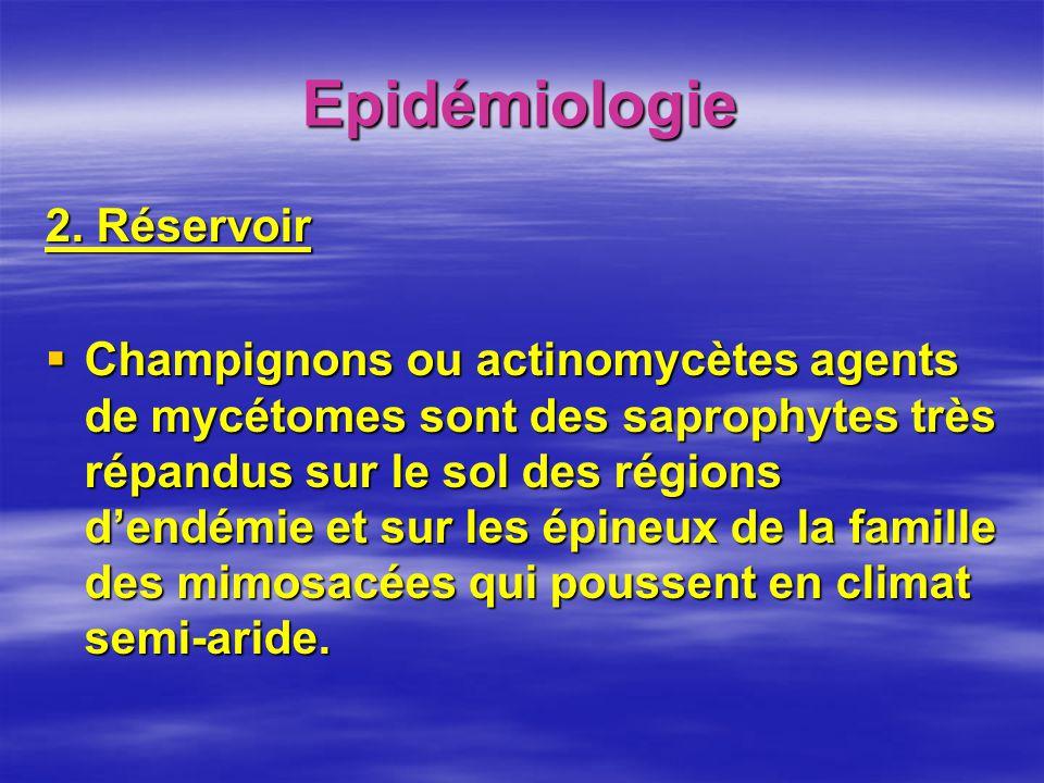 Epidémiologie 2. Réservoir Champignons ou actinomycètes agents de mycétomes sont des saprophytes très répandus sur le sol des régions dendémie et sur