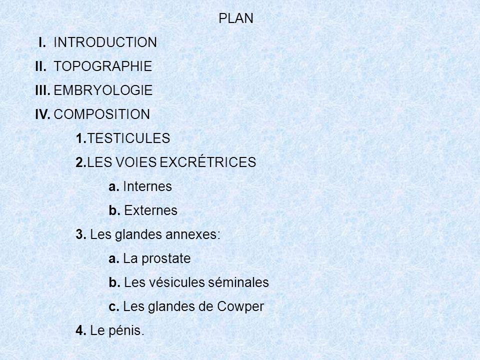 PLAN I. INTRODUCTION II. TOPOGRAPHIE III. EMBRYOLOGIE IV. COMPOSITION 1.TESTICULES 2.LES VOIES EXCRÉTRICES a. Internes b. Externes 3. Les glandes anne