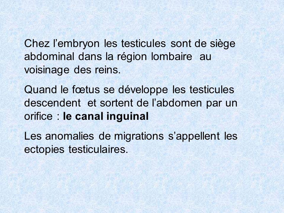 Chez lembryon les testicules sont de siège abdominal dans la région lombaire au voisinage des reins. Quand le fœtus se développe les testicules descen