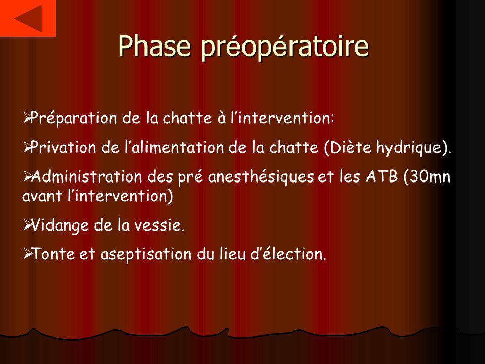 Phase pr é op é ratoire Préparation de la chatte à lintervention: Privation de lalimentation de la chatte (Diète hydrique). Administration des pré ane