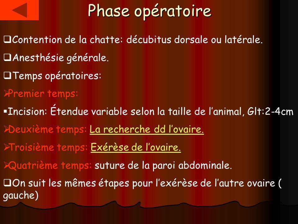 Phase opératoire Contention de la chatte: décubitus dorsale ou latérale.