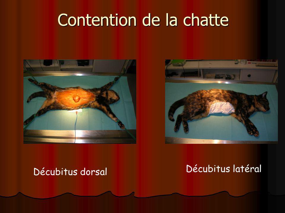 Contention de la chatte Décubitus dorsal Décubitus latéral