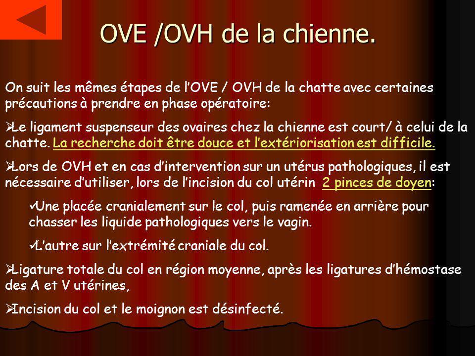 OVE /OVH de la chienne. On suit les mêmes étapes de lOVE / OVH de la chatte avec certaines précautions à prendre en phase opératoire: Le ligament susp