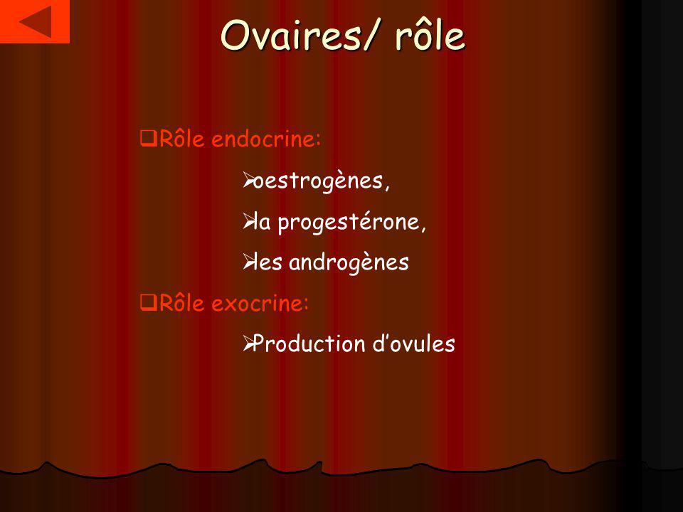 Ovaires/ rôle Rôle endocrine: oestrogènes, la progestérone, les androgènes Rôle exocrine: Production dovules