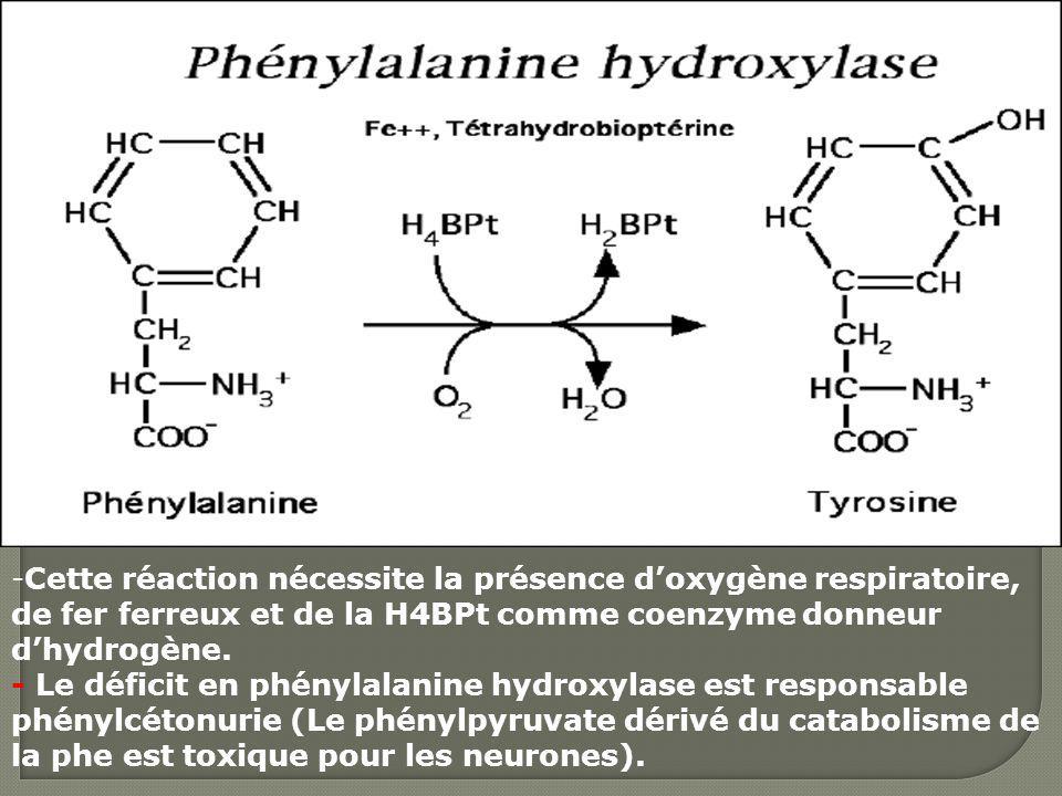 -Cette réaction nécessite la présence doxygène respiratoire, de fer ferreux et de la H4BPt comme coenzyme donneur dhydrogène. - Le déficit en phénylal