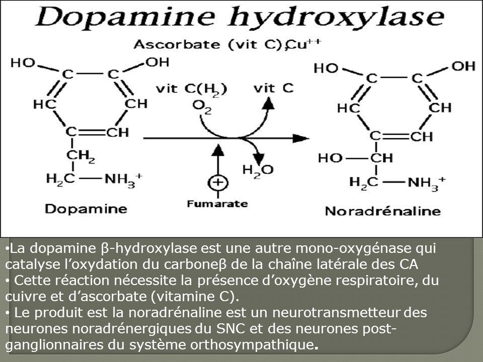 La dopamine β-hydroxylase est une autre mono-oxygénase qui catalyse loxydation du carboneβ de la chaîne latérale des CA Cette réaction nécessite la pr