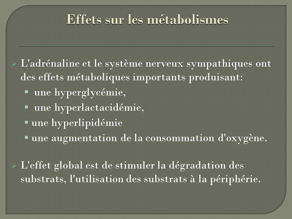 L'adrénaline et le système nerveux sympathiques ont des effets métaboliques importants produisant: une hyperglycémie, une hyperlactacidémie, une hyper