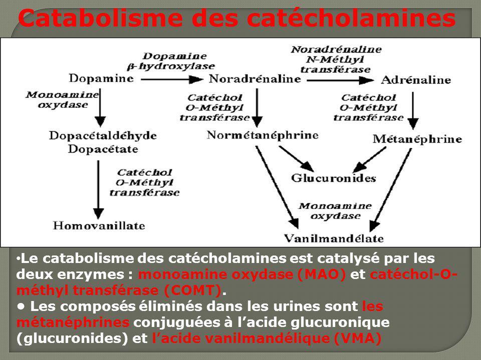 Le catabolisme des catécholamines est catalysé par les deux enzymes : monoamine oxydase (MAO) et catéchol-O- méthyl transférase (COMT). Les composés é