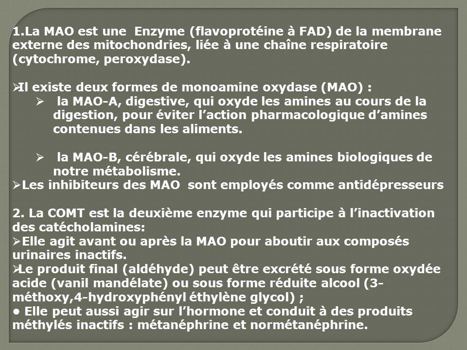1.La MAO est une Enzyme (flavoprotéine à FAD) de la membrane externe des mitochondries, liée à une chaîne respiratoire (cytochrome, peroxydase). Il ex