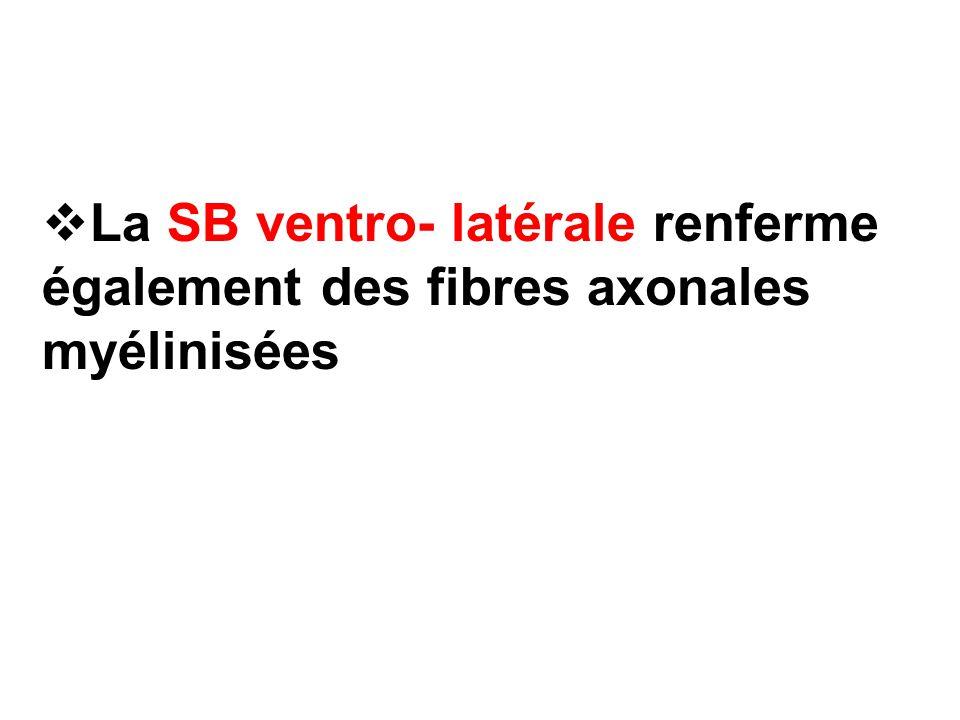 La SB ventro- latérale renferme également des fibres axonales myélinisées
