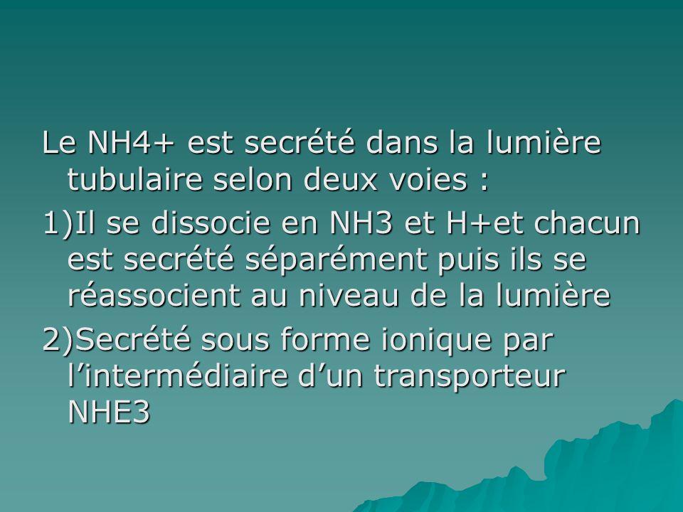 Le NH4+ est secrété dans la lumière tubulaire selon deux voies : 1)Il se dissocie en NH3 et H+et chacun est secrété séparément puis ils se réassocient