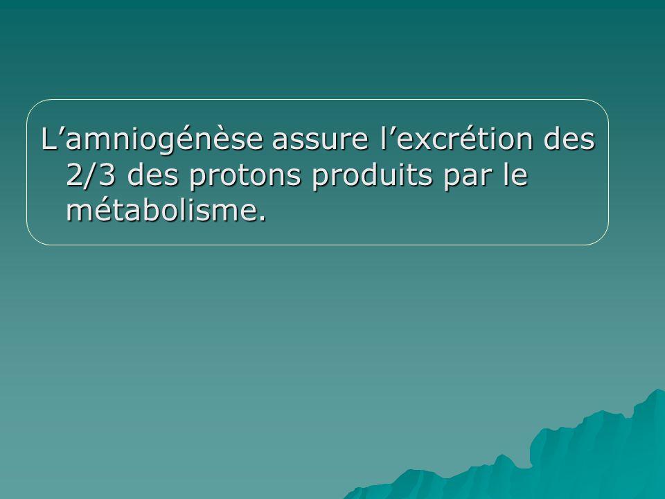 Lamniogénèse assure lexcrétion des 2/3 des protons produits par le métabolisme.
