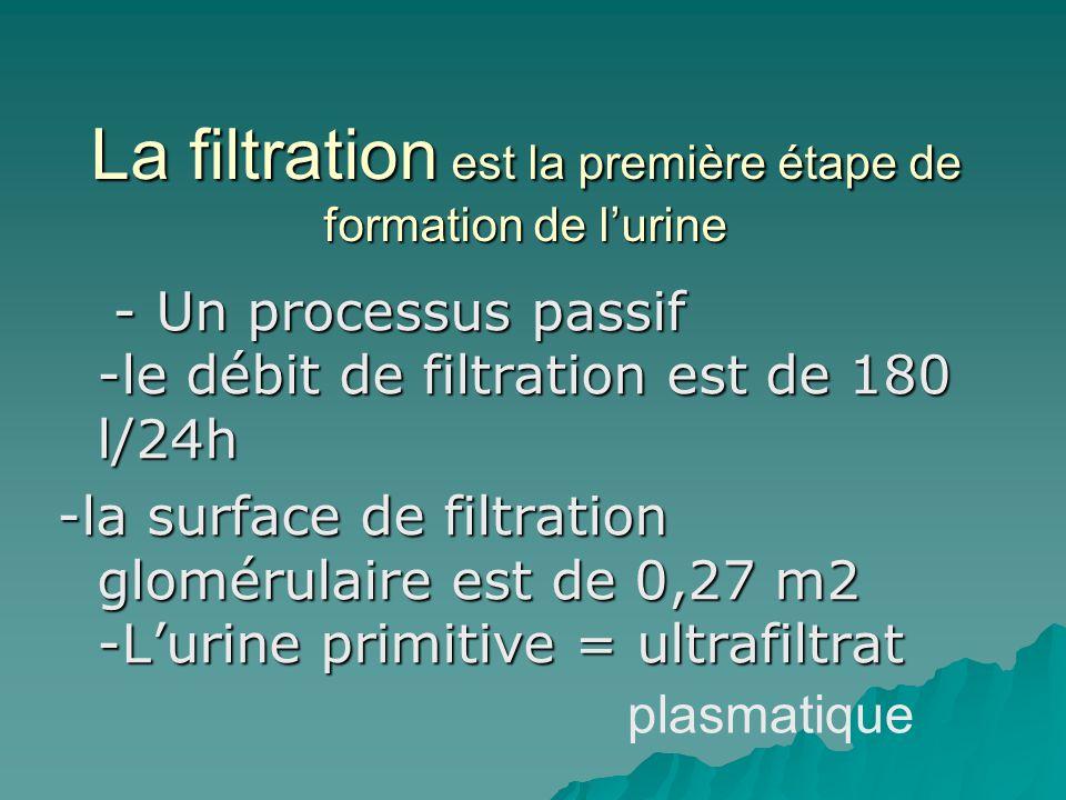La filtration est la première étape de formation de lurine - Un processus passif -le débit de filtration est de 180 l/24h - Un processus passif -le dé