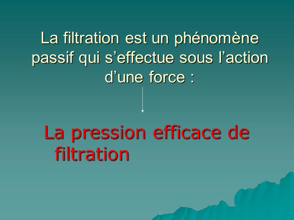 La filtration est un phénomène passif qui seffectue sous laction dune force : La pression efficace de filtration