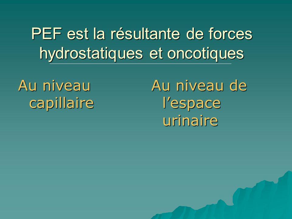 PEF est la résultante de forces hydrostatiques et oncotiques Au niveau capillaire Au niveau de lespace urinaire