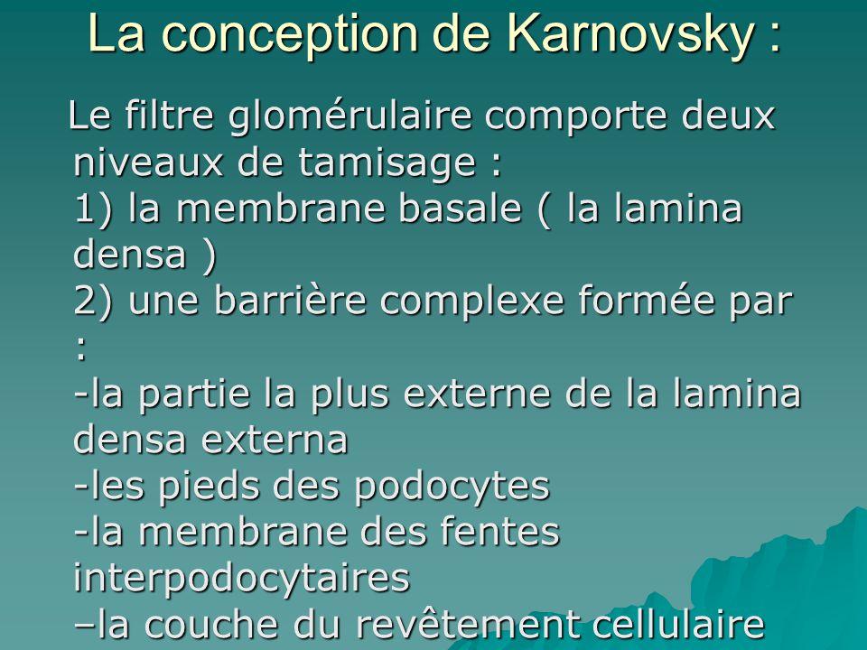 La conception de Karnovsky : Le filtre glomérulaire comporte deux niveaux de tamisage : 1) la membrane basale ( la lamina densa ) 2) une barrière comp