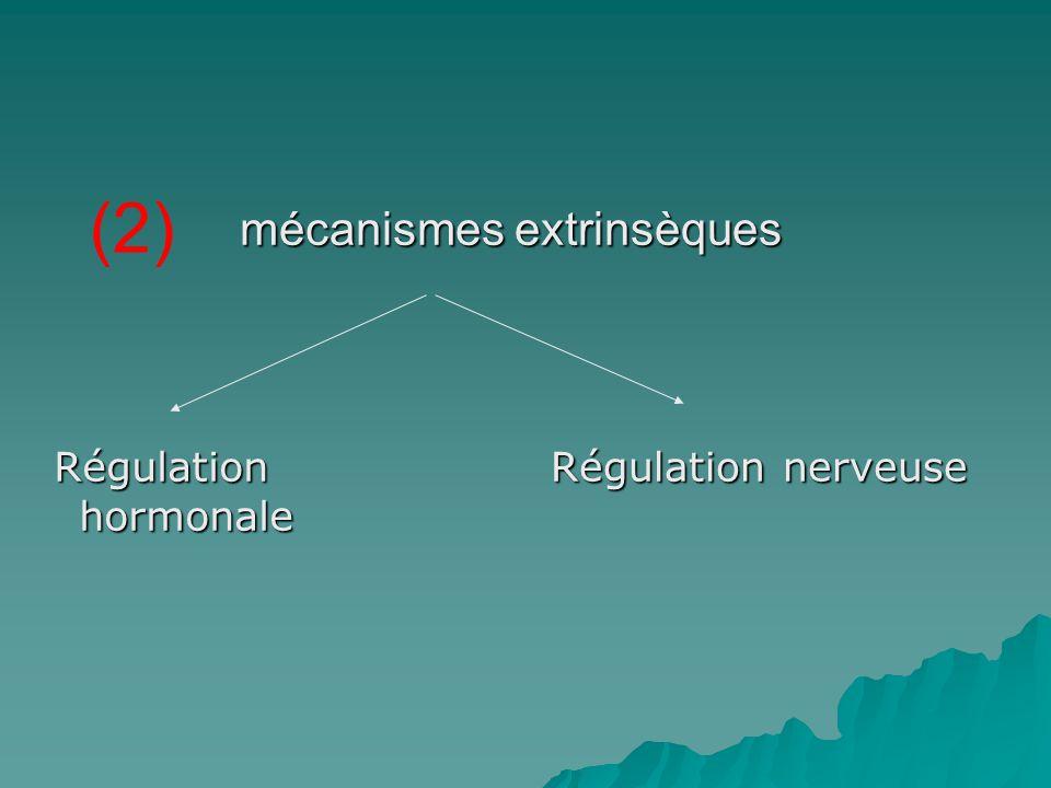 mécanismes extrinsèques Régulation hormonale Régulation hormonale Régulation nerveuse Régulation nerveuse (2)
