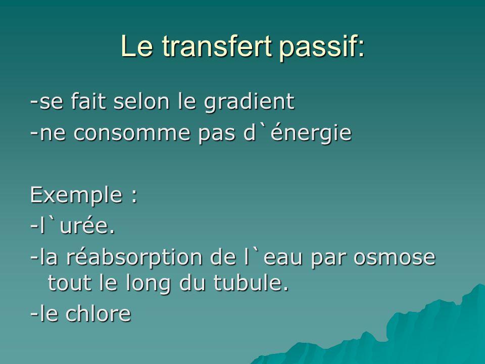 Le transfert passif: -se fait selon le gradient -ne consomme pas d`énergie Exemple : -l`urée. -la réabsorption de l`eau par osmose tout le long du tub