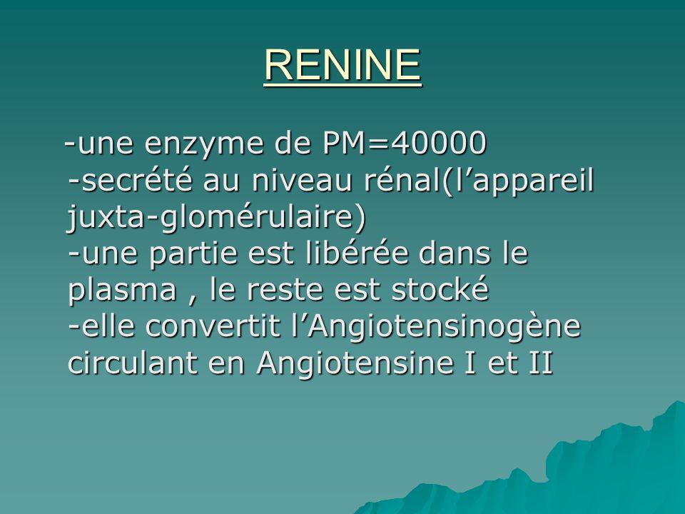 RENINE -une enzyme de PM=40000 -secrété au niveau rénal(lappareil juxta-glomérulaire) -une partie est libérée dans le plasma, le reste est stocké -ell