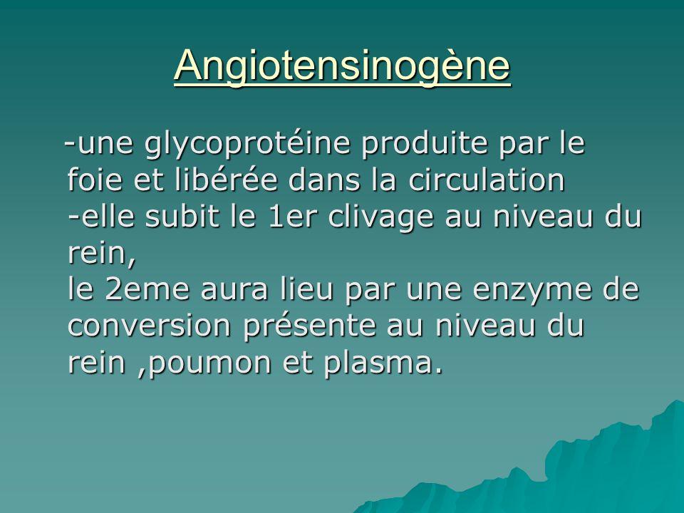 Angiotensinogène -une glycoprotéine produite par le foie et libérée dans la circulation -elle subit le 1er clivage au niveau du rein, le 2eme aura lie