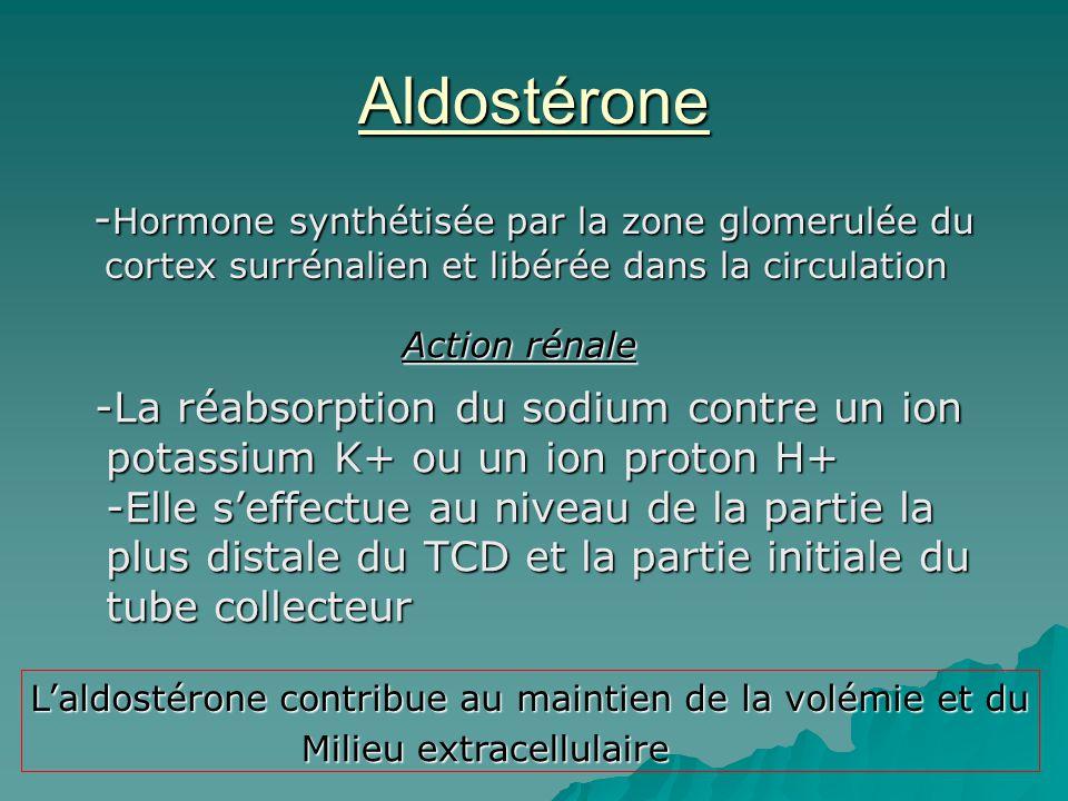 Aldostérone - Hormone synthétisée par la zone glomerulée du cortex surrénalien et libérée dans la circulation - Hormone synthétisée par la zone glomer