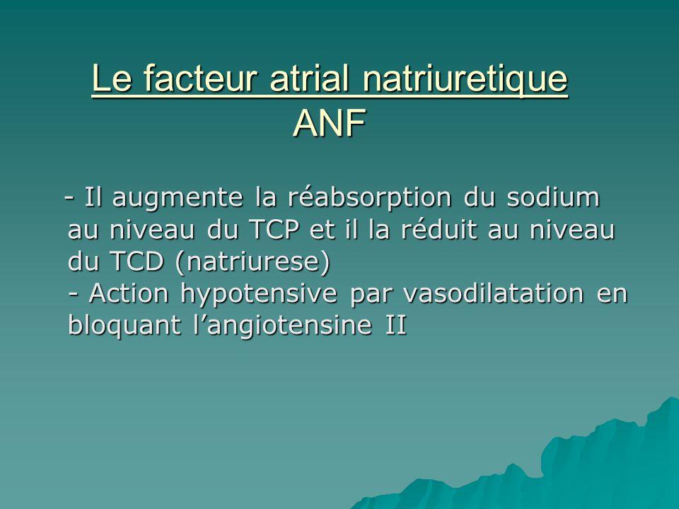 Le facteur atrial natriuretique ANF - Il augmente la réabsorption du sodium au niveau du TCP et il la réduit au niveau du TCD (natriurese) - Action hy