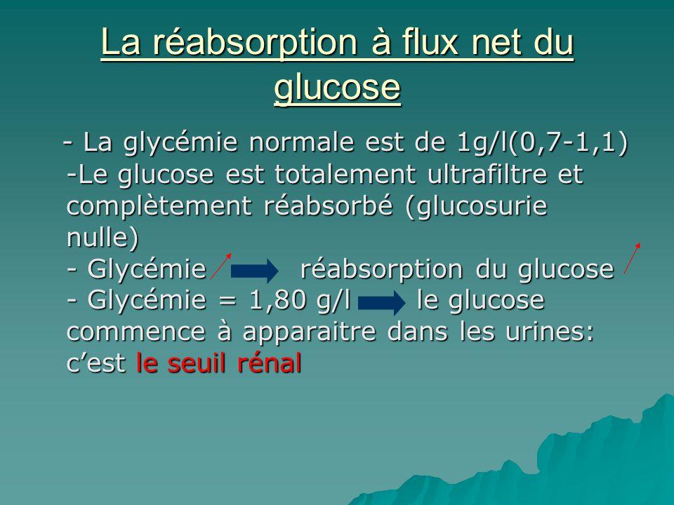 La réabsorption à flux net du glucose - La glycémie normale est de 1g/l(0,7-1,1) -Le glucose est totalement ultrafiltre et complètement réabsorbé (glu