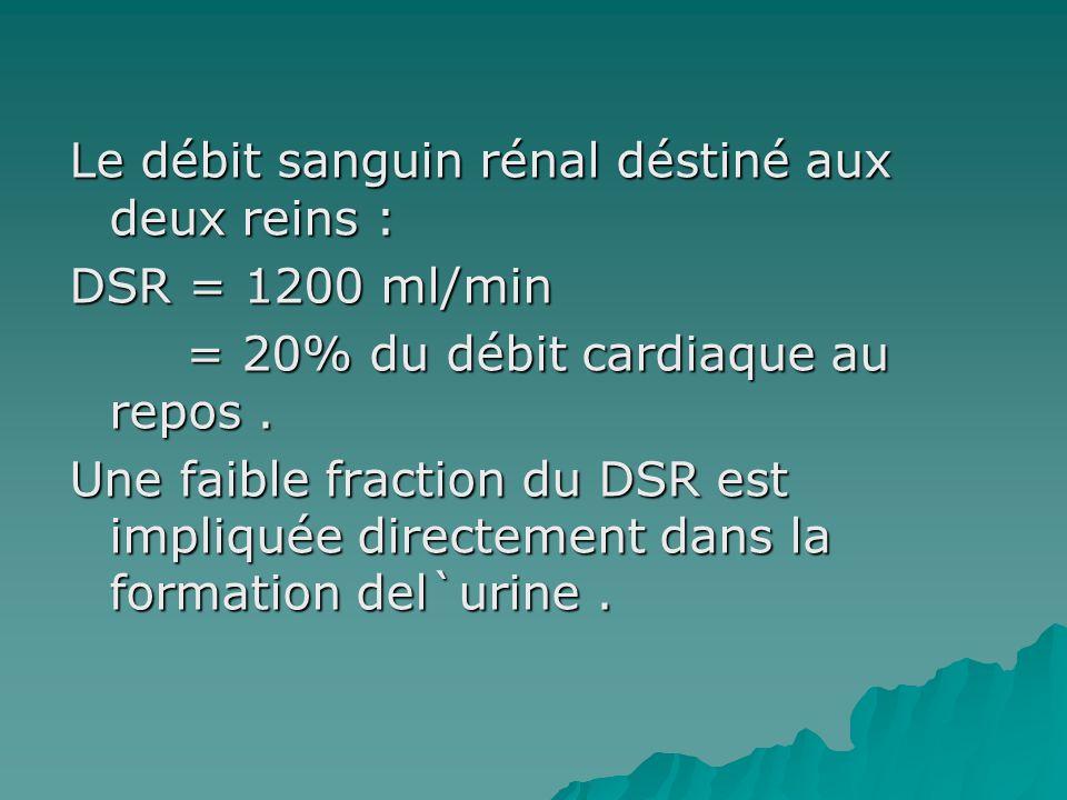 Le débit sanguin rénal déstiné aux deux reins : DSR = 1200 ml/min = 20% du débit cardiaque au repos. = 20% du débit cardiaque au repos. Une faible fra