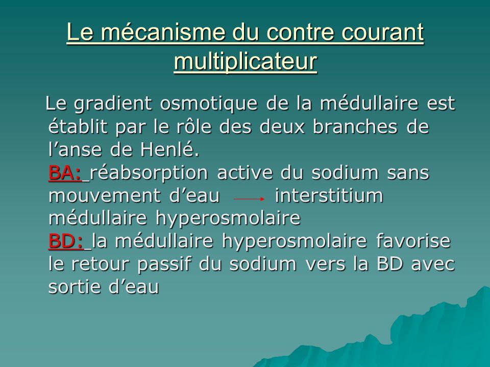Le mécanisme du contre courant multiplicateur Le gradient osmotique de la médullaire est établit par le rôle des deux branches de lanse de Henlé. BA: