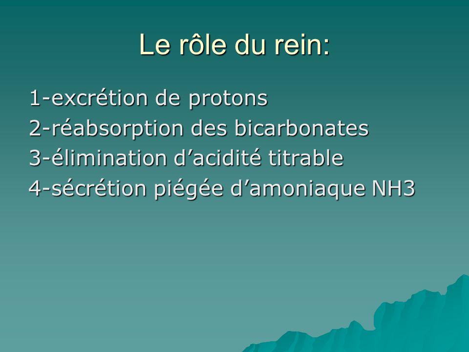Le rôle du rein: 1-excrétion de protons 2-réabsorption des bicarbonates 3-élimination dacidité titrable 4-sécrétion piégée damoniaque NH3