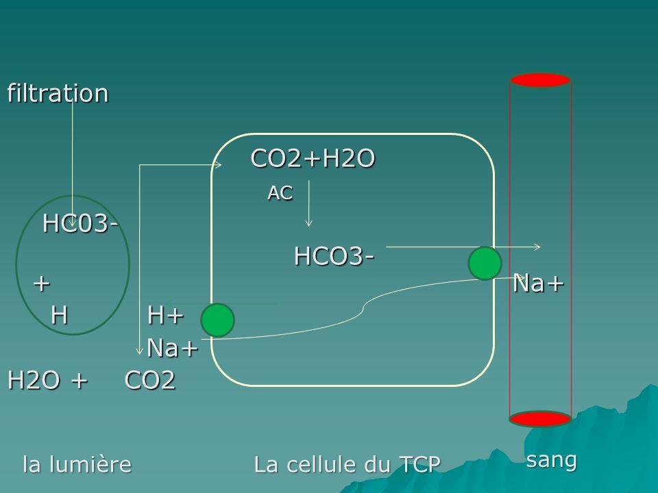 filtration CO2+H2O CO2+H2O AC AC HC03- HC03- HCO3- + Na+ HCO3- + Na+ H H+ H H+ Na+ Na+ H2O + CO2 la lumière La cellule du TCP sang