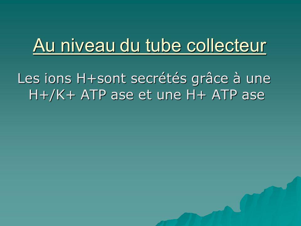 Au niveau du tube collecteur Les ions H+sont secrétés grâce à une H+/K+ ATP ase et une H+ ATP ase