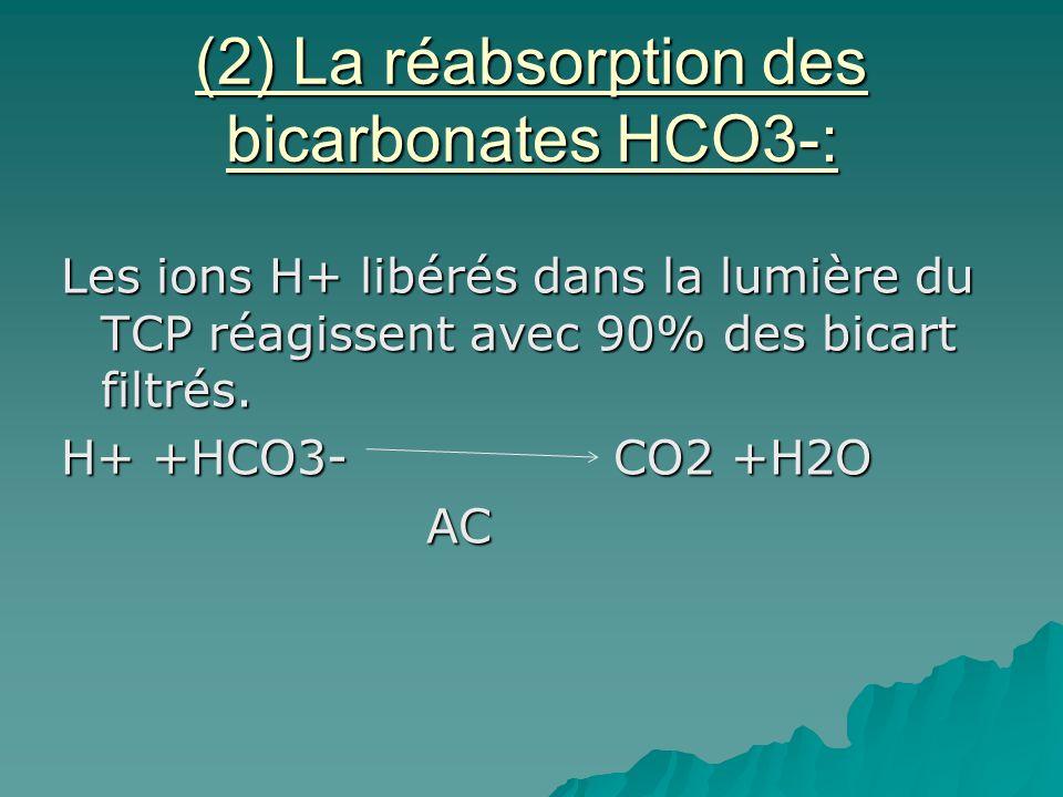 (2) La réabsorption des bicarbonates HCO3-: Les ions H+ libérés dans la lumière du TCP réagissent avec 90% des bicart filtrés. H+ +HCO3- CO2 +H2O AC A