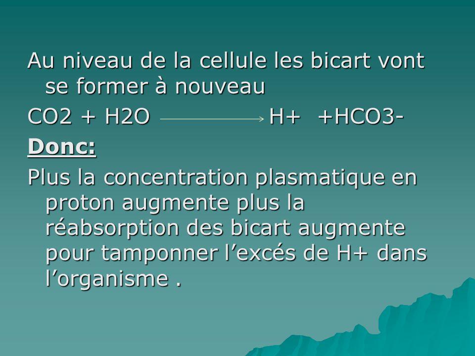 Au niveau de la cellule les bicart vont se former à nouveau CO2 + H2O H+ +HCO3- Donc: Plus la concentration plasmatique en proton augmente plus la réa