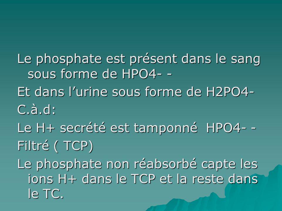 Le phosphate est présent dans le sang sous forme de HPO4- - Et dans lurine sous forme de H2PO4- C.à.d: Le H+ secrété est tamponné HPO4- - Filtré ( TCP