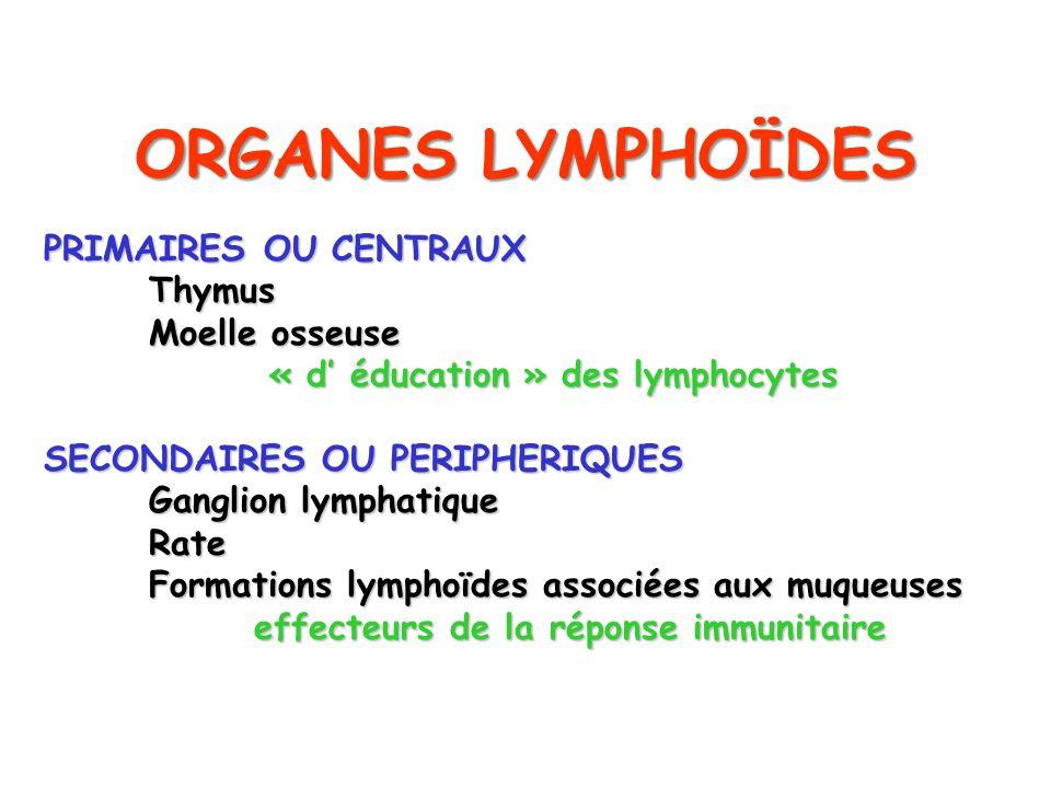 ORGANES LYMPHOÏDES PRIMAIRES OU CENTRAUX Thymus Thymus Moelle osseuse « d éducation » des lymphocytes « d éducation » des lymphocytes SECONDAIRES OU P