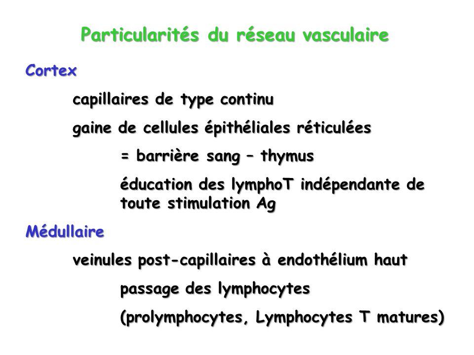 Particularités du réseau vasculaire Cortex capillaires de type continu gaine de cellules épithéliales réticulées = barrière sang – thymus éducation de