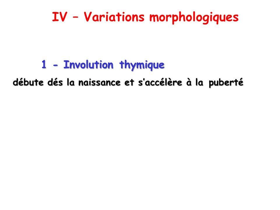 1 - Involution thymique débute dés la naissance et saccélère à la puberté IV – Variations morphologiques