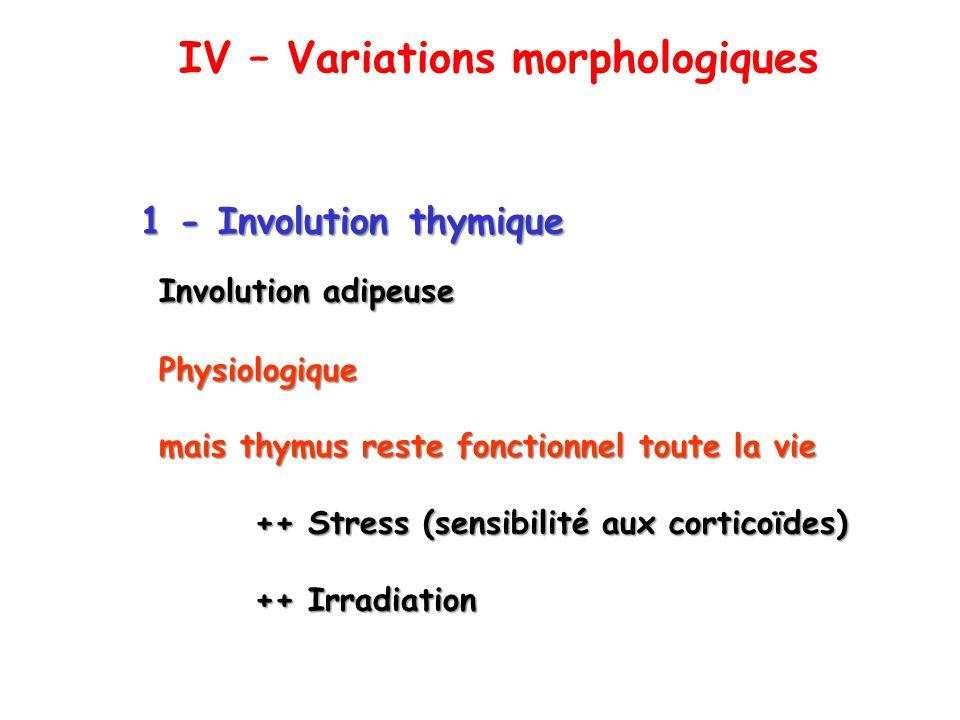 2 - Hyperplasie thymique myasthénie autres désordres immunitaires WT KO p27 Thymus de souris p27 : suppresseur de tumeur IV – Variations morphologiques