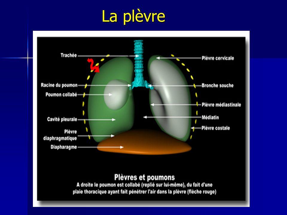 La plèvre