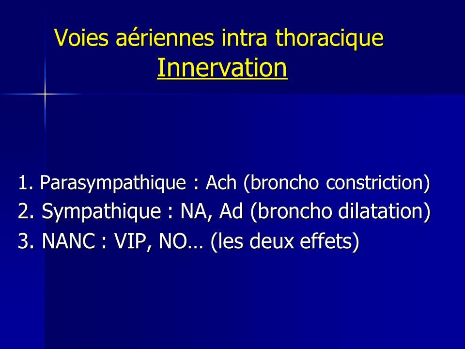 Voies aériennes intra thoracique Innervation 1.Parasympathique : Ach (broncho constriction) 2.