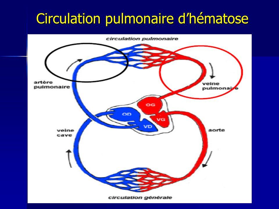 Circulation pulmonaire dhématose